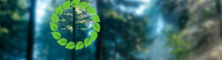 Размытый лес