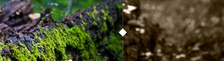 Сравнение двух изображений