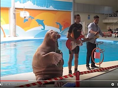 Эффектный морж играет на саксофоне